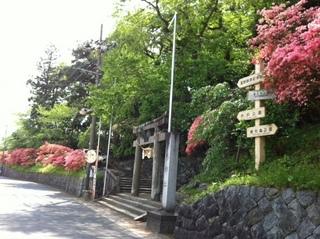 公園つつじ2015-3.JPG