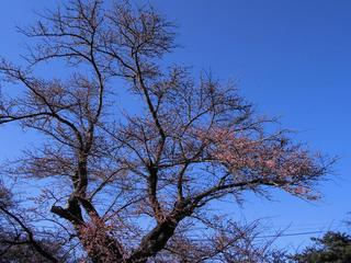 基準木-となり.JPG