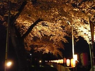 桜の回廊2014.jpg