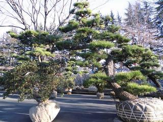 盆栽まつり3.JPG
