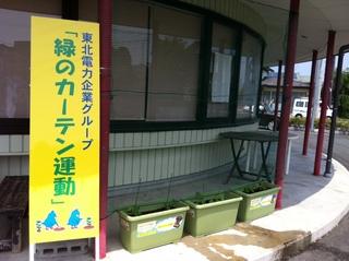 緑のカーテン20150529-3.JPG