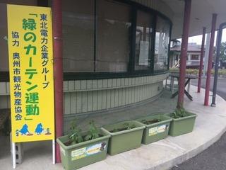 緑のカーテン2016.JPG